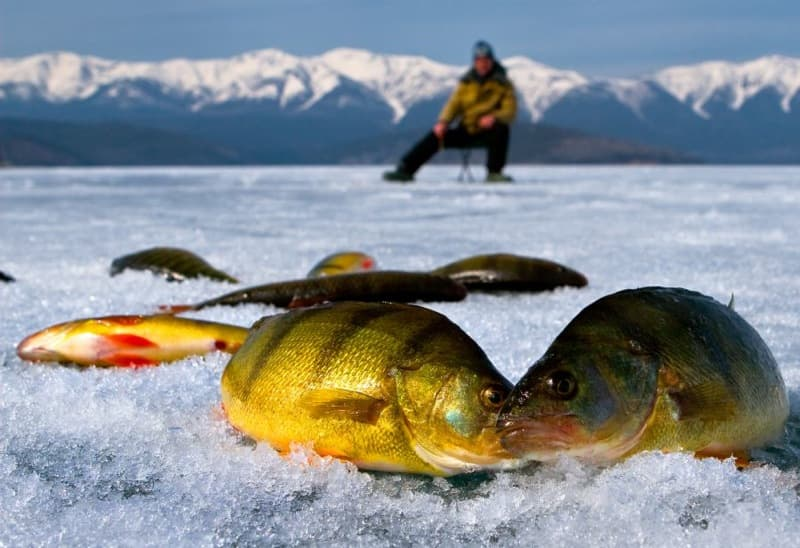 Ловля окуня зимой на байкале видео
