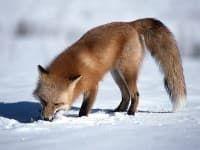 4e5fd4ea08cb0_fox500x300