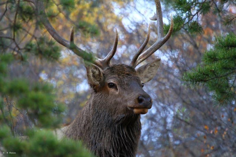Природа на Байкале