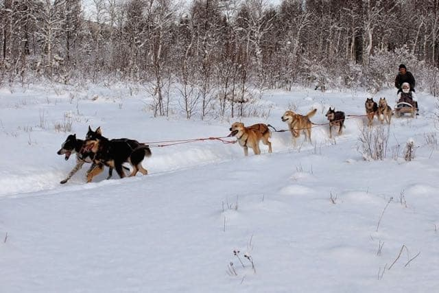 baikal_dogs_sledding_centre