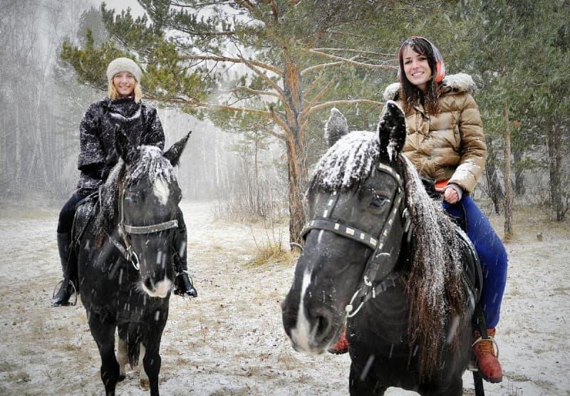 Проулка на лошадях по зимнему лесу