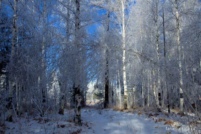 tajjga-zimojj