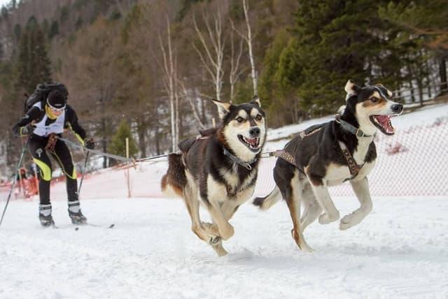 Гонка на собачьих упряжках  BAIKAL RACE, Арсений Тюрюмин