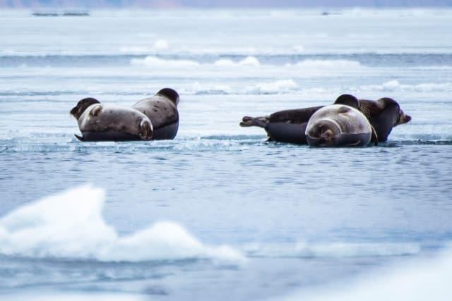 Тур на Байкал Айсберги и нерпы