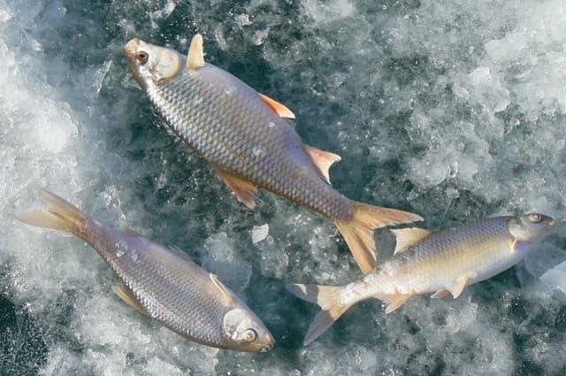 Зимняя рыбалка на Байкале