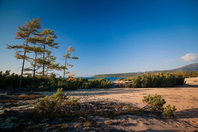 Кедровый стланик на Байкальском побережье