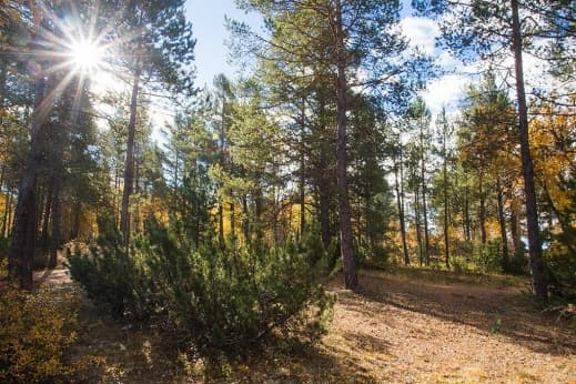 Таежный лес
